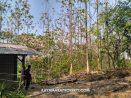 Lahan Luas Harga Murah Desa Ciamis, Suban